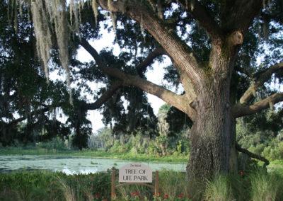 Tree of Life park