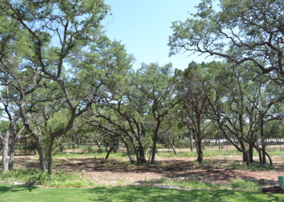 Tree clusters surround residential lots