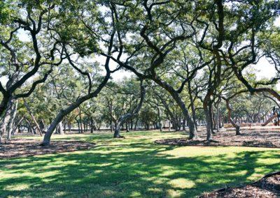 Tree preservation landscape design